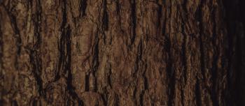 Bark spuds